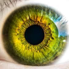 Retina, eye, Vision, Dr. Notaro